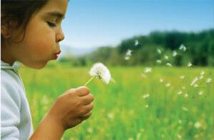 allergies_child_dandelion_air_montana_B